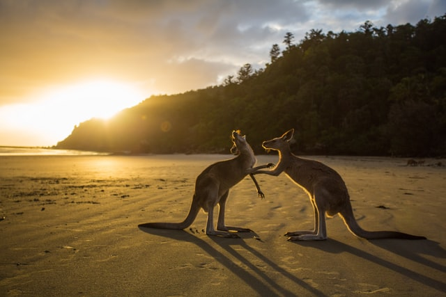 Kangaroo Market: Apa dan Bagaimana Menyikapinya?